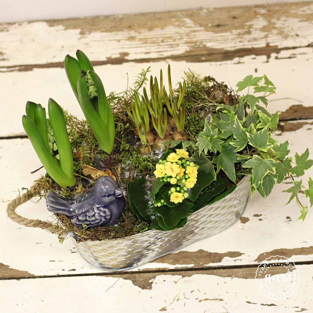Композиция из луковичных растений с птичкой, каланхое и плющом